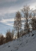 The forest in the beginning of winter