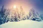 Fantastic evening mountain landscape glowing by sunlight. Dramatic wintry scene. Carpathian, Ukraine, Europe. Beauty world. Retro filter. Instagram toning effect. Happy New Year!