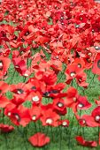 picture of tribute  - Handmade Poppies at the Imperial War museum - JPG
