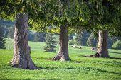 Trees On The Meadow, Slovakia