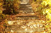Stone steps in autumn park