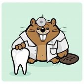 stock photo of animal teeth  - Vector Illustration of a cute beaver dentist smiling and holding a healthy tooth - JPG
