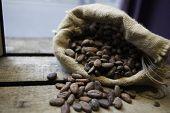 Cocoa Sac Over The Wood