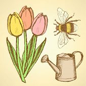 Sketch Tulip, Bee And Watering Can