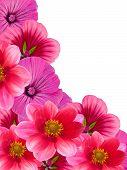 Flowers From A Garden