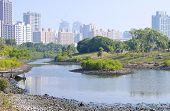 The wetland swamp near city