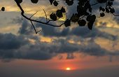 dark cloudy sky at sunset behind leaves