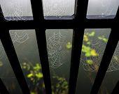 foto of cobweb  - Cobwebs on railing of bridge in foggy morning - JPG