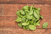 pic of red barn  - fresh baby spinach leaves against rustic - JPG