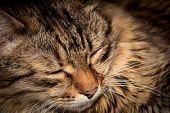 stock photo of fanny  - Fanny face of sleeping cat - JPG