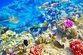 pic of shoal fish  - Wonderful and beautiful underwater world with corals and tropical fish - JPG