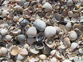 image of azov  - fogografiya shells made on the coast of the sea of azov in 2008 - JPG