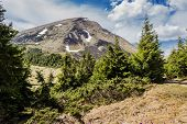 image of juniper-tree  - View of Mount Petros in the Ukrainian Carpathians in spring against the sky - JPG