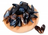 picture of mollusca  - Shells of mussels on cutting board - JPG