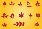 Autumn Leaves -  Illustration
