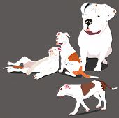stock photo of puppies mother dog  - a vector illustration of american bulldog puppies and their mother in different positions - JPG