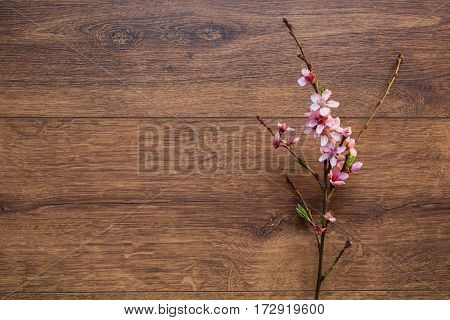 poster of Spring branch of blossom cherry on a wooden background with a warm lamp light. Pink spring flowers flat lay copyspace. Spring background. Spring tree