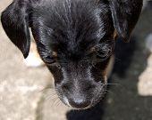Close Up, Puppy