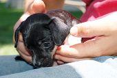 Puppy, Terrier Mix