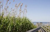 Sea Oats By The Boardwalk
