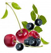 Vector. Blueberry and cherries with leaves.