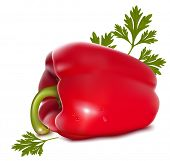 Photo-realistic vector illustration. Red sweet pepper with drops of water and parsley.