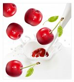 Vector illustration. Ripe red cherries falling into the milky splash.