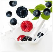 Vector. Ripe forest berries falling into the milky splash. Background for design of packing yogurt.