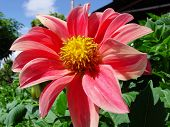 Flor, Flor