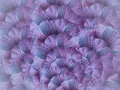 Floral Blue-pink Halftone  Background. A Bouquet Of  Pink-blue  Petals  Flowers.  Close-up.   Floral poster