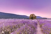 Beautiful Image Of Stunning Sunset With Atmospheric Clouds And Sky Over Vibrant Ripe Lavender Fields poster