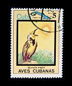 CUBA - CIRCA 1983: Un sello impreso por Cuba muestra de aves tropicales, sello es de la serie, alrededor de 19
