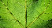 Green leaf texture. Series