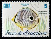 Cuba - CIRCA 1985: A stamp printed in Cuba shows fish Chaetodon capistratus, circa 1985