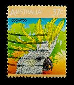 AUSTRALIA - CIRCA 1990s: stamp printed by Australia, shows Parrot cockatoo, circa 1990s.