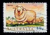 AUSTRALIA - CIRCA 1990s: A stamp printed in Australia shows image of Merino sheep, circa 1990s