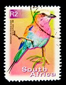 SOUTH AFRICA - CIRCA 2000: A stamp printed in South Africa shows image of a Lilac-breasted roller (C