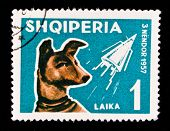 ALBANIA - CIRCA 1957: A stamp printed in Albania showing first animal in space - the dog Laika, circ