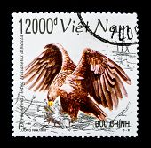 VIETNAM - CIRCA 1998: A stamp printed in Vietnam shows Lesser Fish Eagle - Ichthyophaga Nana, series