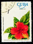 CUBA - CIRCA 1977: A stamp printed by Cuba shows Geranium flowers