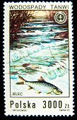 POLAND - CIRCA 1992: A stamp printed in Poland shows dace fish, circa 1992
