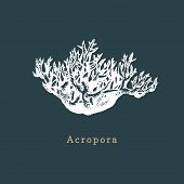 Acropora Coral Vector Illustration. Drawing Of Sea Polyp On Dark Background poster
