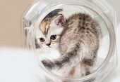 Fluffy Gray Kitten In A Round Jar. Portrait Of A Cat Close-up, View From The Back. The Concept Of Pe poster