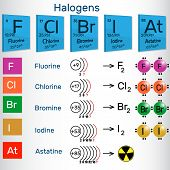 Halogens. Chemical Elements Of Periodic Table. Vector Illustration poster