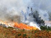 stock photo of deforestation  - Wild bush vegetation in fire - JPG