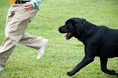 Mestre brincar com seu cão