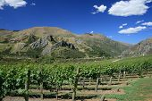 Winery Mountain Scene New Zealand