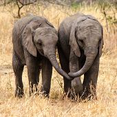 Best Friends - baby elephants
