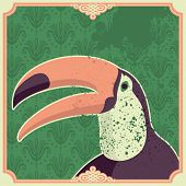 image of polly  - Vintage illustration with toucan - JPG
