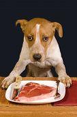 Hund Abendessen Zeit.